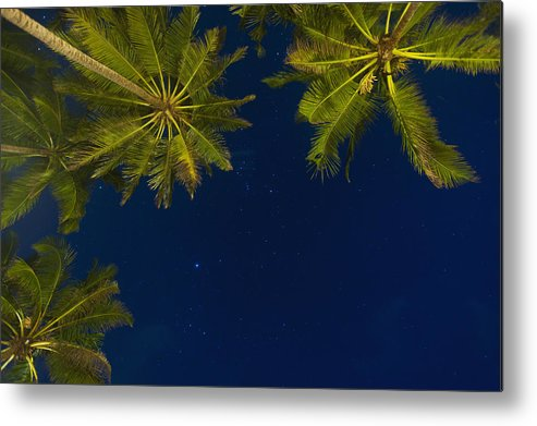 Cumming Metal Print featuring the photograph Stars At Night With Palm Tree Thalpe by Ian Cumming