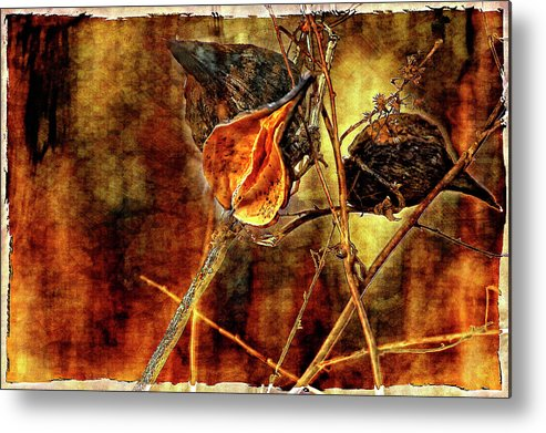Weeds Metal Print featuring the photograph Still Life Study II by Steve Harrington