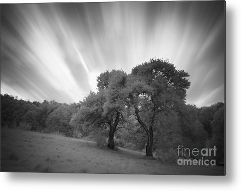 Landscape Metal Print featuring the photograph Strange Trees On Meadow by Photo Cosma