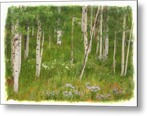 Aspen Grove Metal Print featuring the photograph Summer In The Colorado Mountains by Priscilla Burgers