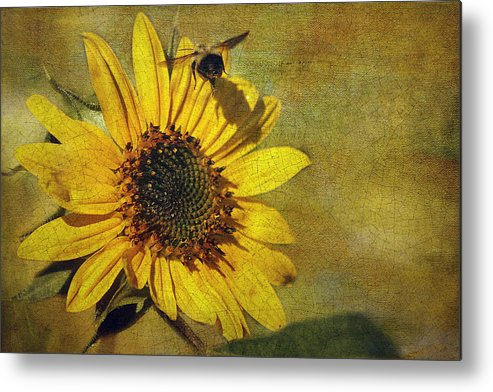 Cindi Ressler Metal Print featuring the photograph Sunflower And Bumble Bee by Cindi Ressler