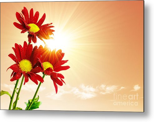 Background Metal Print featuring the photograph Sunrays Flowers by Carlos Caetano