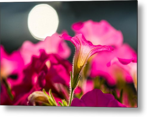Background Metal Print featuring the photograph Sunrise 1 - Featured 3 by Alexander Senin
