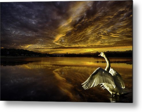 Swan Metal Print featuring the photograph Sunset At Swan Lake by Ludmila Nayvelt
