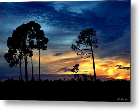 Blue Metal Print featuring the photograph Sunset Behind The Trees by Patricia Twardzik