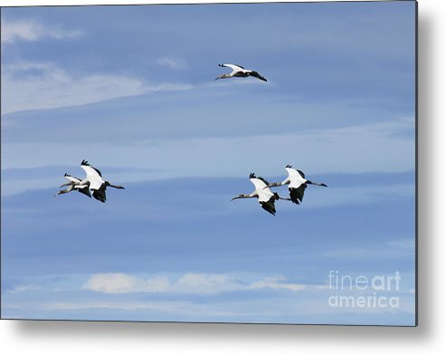 Coast Metal Print featuring the photograph Surreal Flight by Mary and Curt Johnston