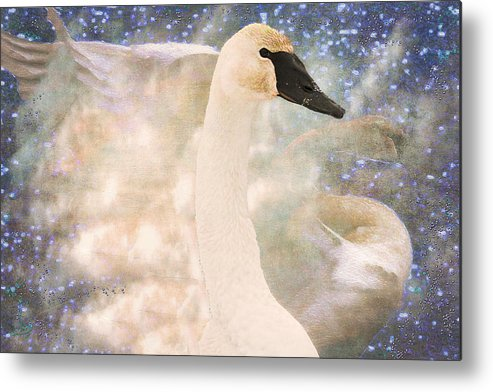Bird Metal Print featuring the photograph Swan Journey by Kathy Bassett