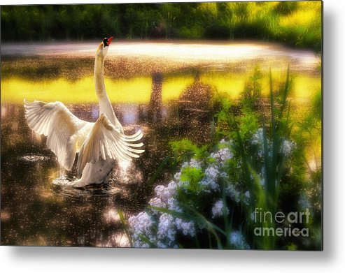 Swan Metal Print featuring the photograph Swan Lake by Lois Bryan
