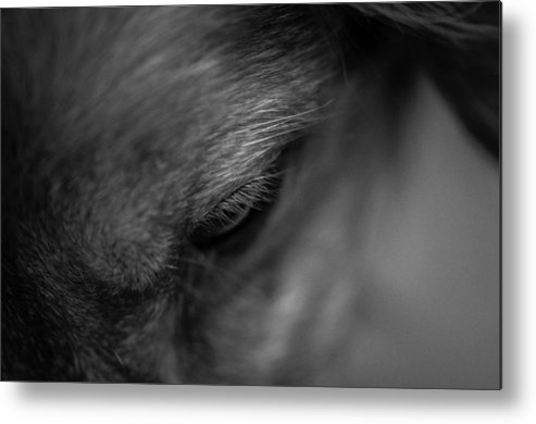 Black And White Metal Print featuring the photograph Swept by Kelly Hayner
