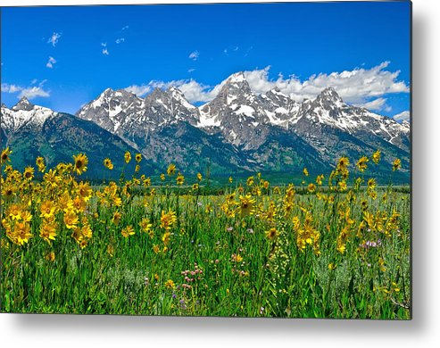 Grand Teton National Park Metal Print featuring the photograph Teton Peaks And Flowers by Greg Norrell