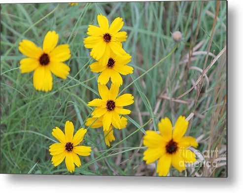 Texas Wild Flower Metal Print featuring the photograph Texas Wild Flower by Angie Andress