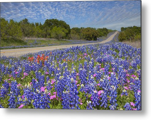 Bluebonnet Images Metal Print featuring the photograph Texas Wildflowers Images - Bluebonnets 2 by Rob Greebon