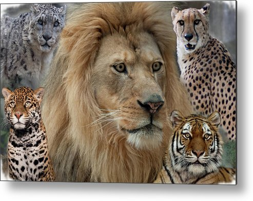 300mm Lens Metal Print featuring the photograph The Big Cats by Matt Steffen