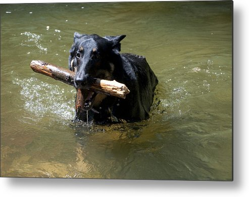 Dog Metal Print featuring the photograph The Dog Days Of Summer by Bill Cannon