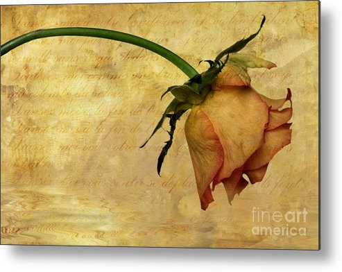 Flora Metal Print featuring the photograph The End Of Love by John Edwards