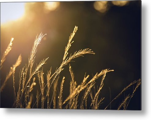 Nature Metal Print featuring the photograph The Golden Hour by Lee Harland