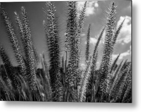 Black And White Art Metal Print featuring the photograph The Grass Is Greener by Ronald Hunt