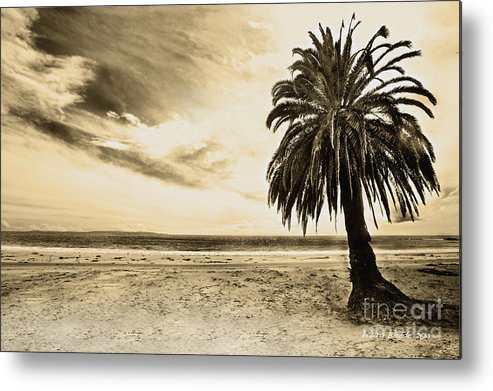 Gaviota Metal Print featuring the photograph The Palm Swayed As The Storm On The Ocean Blew In by Artist and Photographer Laura Wrede