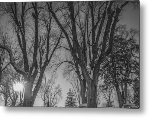 Snow Metal Print featuring the photograph The Park In Black And White by Gloria Pasko