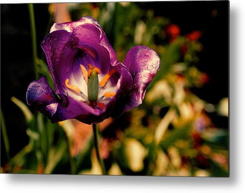 By Chris Modlin Metal Print featuring the photograph The Purple Rose Of Cairo by Chris Modlin