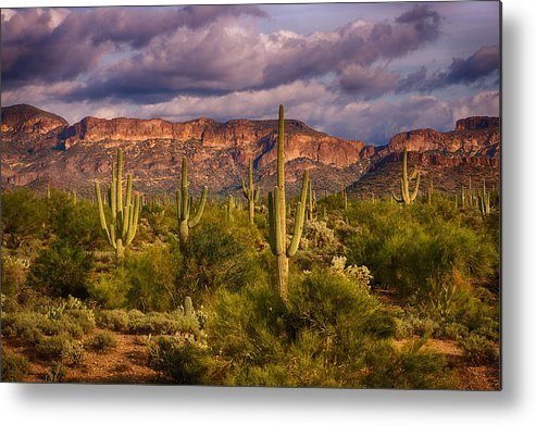 Sonoran Desert Metal Print featuring the photograph The Sonoran Golden Hour by Saija Lehtonen