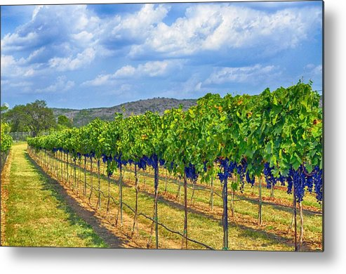 Wine Country Metal Print featuring the photograph The Vineyard In Color by Kristina Deane