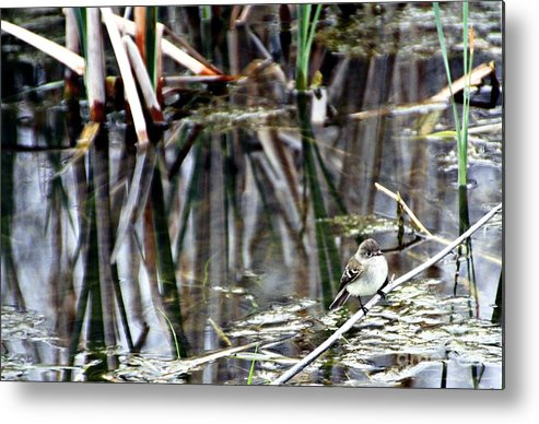 Ruby-crowned Kinglet Birds Metal Print featuring the photograph The Watch by Elizabeth Winter