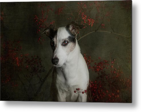 Dog Metal Print featuring the photograph The Woods Are Lovely, Dark And Deep..... by Heike Willers