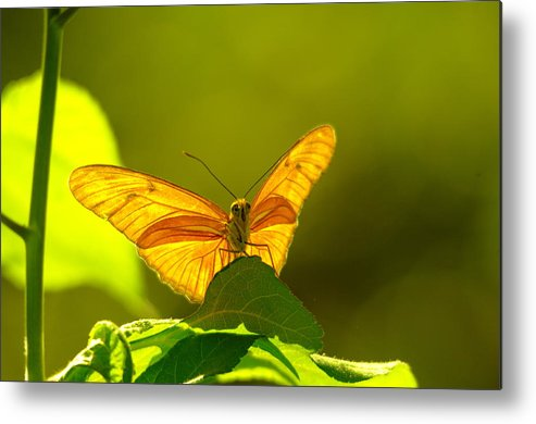 Insect Metal Print featuring the photograph Then A Butterfly by Jeff Swan