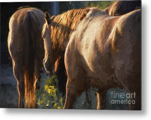 Horses Metal Print featuring the photograph To The Barn by Shannon Story