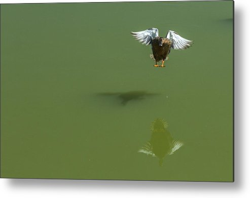 2014 Metal Print featuring the photograph Touch Down by Terry Thomas