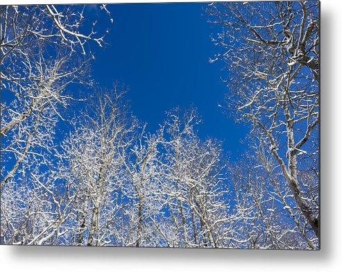 Trees Metal Print featuring the photograph Touching The Winter Sky by Ben and Rachel Melton