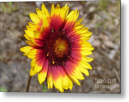 Flower Metal Print featuring the photograph Towards The Sun by Lena Photo Art