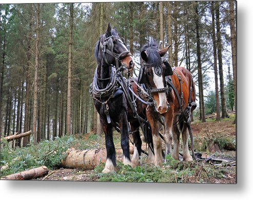 Forest Metal Print featuring the photograph Traditional Forestry by North Devon Photography
