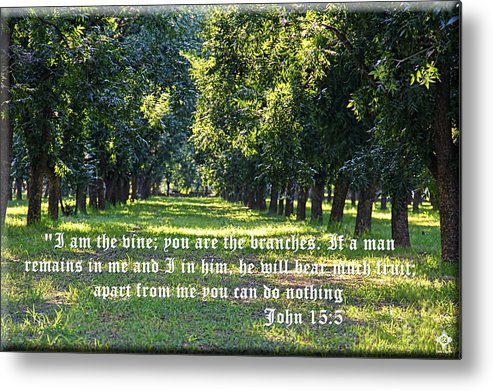 Trees Metal Print featuring the photograph Tranquility by Tony Lopez