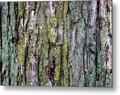 Tree Bark Detail Study Moss Nature Branches Leaves Green Metal Print featuring the mixed media Tree Bark Detail Study by Design Turnpike