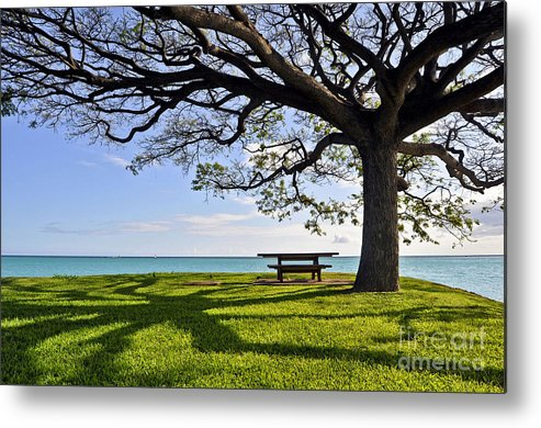 Ocean Metal Print featuring the photograph Tree Canopy by Gina Savage
