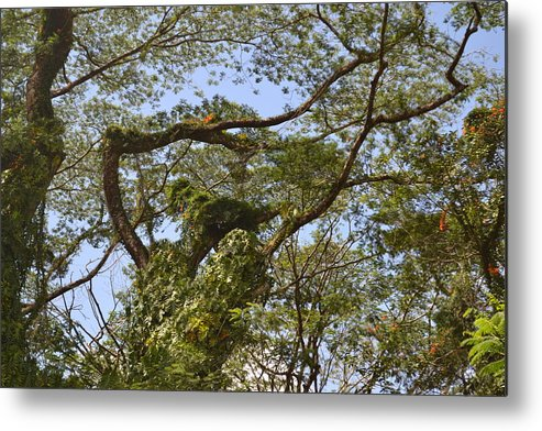 Big Island Metal Print featuring the photograph Tree Dancer by Evan Silver