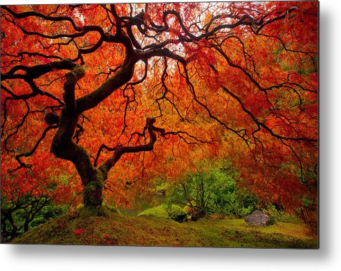 Portland Metal Print featuring the photograph Tree Fire by Darren White
