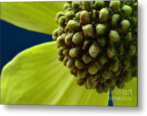 Macro Metal Print featuring the photograph Tree Flower I by Ben Baucum