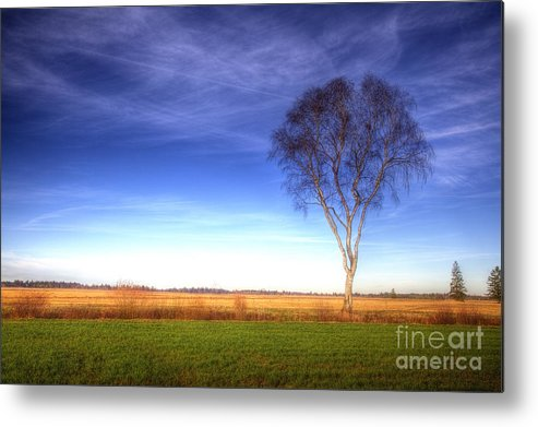 Wiese Metal Print featuring the photograph Tree In The Murnauer Moos by Fabian Roessler