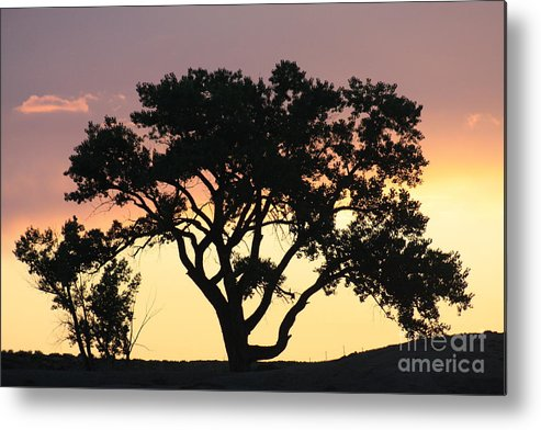 Tree Metal Print featuring the photograph Tree Of Life by Brandi Maher