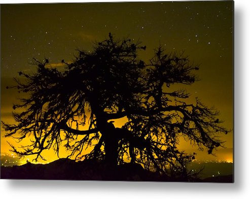 Tree Of Life Metal Print featuring the photograph Tree Of Life by Ryan Phillips