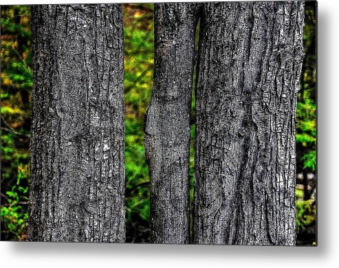 Trees Metal Print featuring the photograph Trees by Phyllis Meinke