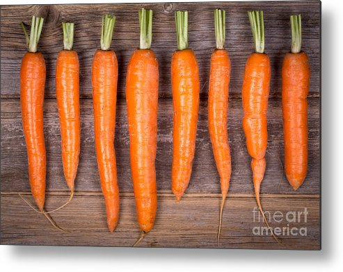 Agriculture Metal Print featuring the photograph Trimmed Carrots In A Row by Jane Rix