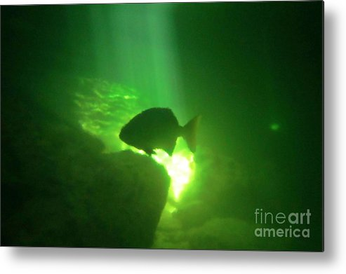 Tropical Fish Shilouette In A Cenote Metal Print featuring the photograph Tropical Fish Shilouette In A Cenote by Halifax photography by John Malone