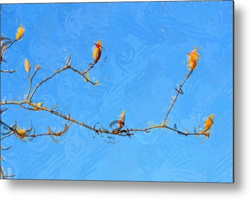 Tulip Metal Print featuring the photograph Tulip Branches by Cindy Whitehead
