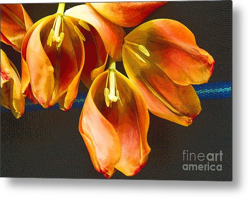 Color Metal Print featuring the photograph Tulip Study 2 by Jeanette French