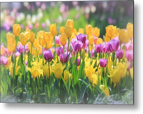 Tulips Metal Print featuring the photograph Tulips by Elizabeth Budd