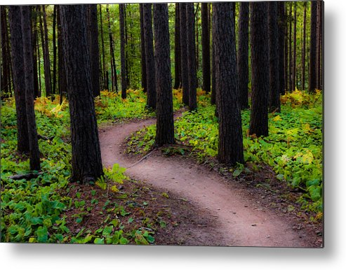 early Fall fall Colors forest Trees autumn Forest amity Woods Duluth Minnesota Nature Serenity Magic Changes greeting Cards nature Greeting Cards Woods mary Amerman Metal Print featuring the photograph Turning by Mary Amerman